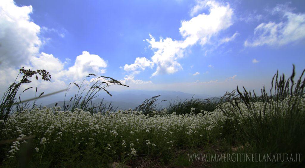 Monte Gennaio primavera